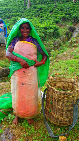 Tea Plantage Worker Sri Lanka